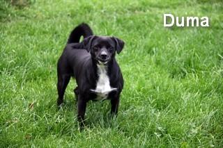 Duma1