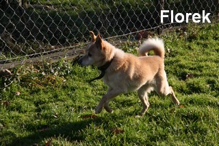 Florek1